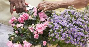 6 Tips For Your Best Garden Yet