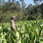 Africa's Youth Not Lured By Unglamorous Farming