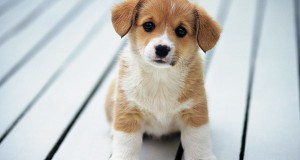 Prepare Your Home For Puppy's Arrival