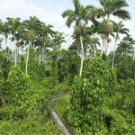 MOU Signed To Protect Endemic Plants In Jamaica