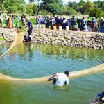 Fish Farming Now A Big Hit In Africa