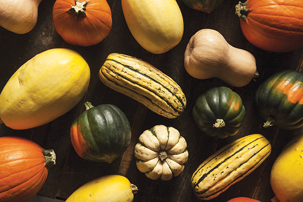 Squash Is The Glory Of The Garden And The Sweetheart Of Gourmet Salads