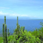 Caribbean Biodiversity Overheated By Climate Change