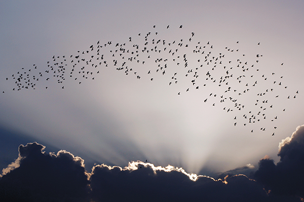 A flock of birds flies over a coastal neighbourhood of Havana, Cuba. The Caribbean Biological Corridor is on the migration route for many species of birds, and its conservation requires multilateral actions in today's era of global warming. Photo credit: Jorge Luis Baños/IPS.