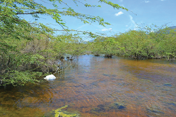 Lake Azuei on the border between the Dominican Republic and Haiti is one of the ecosystems preserved by the Caribbean Biological Corridor. Photo credit: Dionny Matos/IPS.