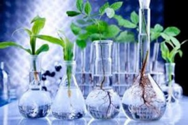 Caribbean To Benefit From Online Course In Biotechnology In Agriculture