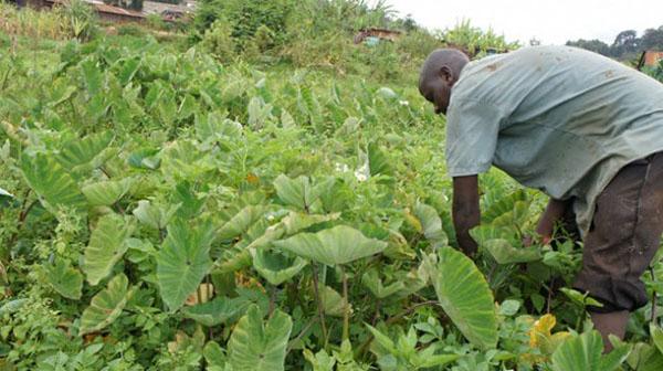Improving Rural Livelihoods Boost Agrarian Economies