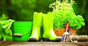A Guide For Beginner Gardeners