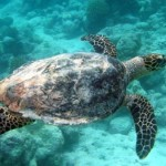 UN Begins Negotiations On Treaty To Protect Marine Resources
