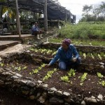 Thaw With United States Will Put Cuba's Agroecology To The Test
