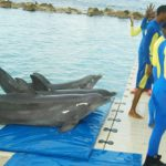 Several trainers working with the dolphins, at the world famous Dolphin Cove Jamaica facility, in Ocho Rios, St. Ann. Photo contributed.