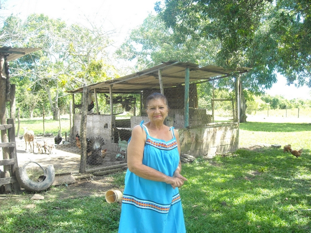 Aura Canache, in front of one of her sheep enclosures on her small farm, less than one hectare in size, located 130 km from Caracas, in the Barlovento farming region in the coastal area of northern Venezuela. She has had difficulty accessing credit to help run her farm. Credit: Estrella Gutiérrez/IPS.