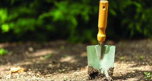 Landscaping Tips For Your Home