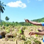 Jamaica Government To Roll Out Assistance To Flood-Affected Farmers Next Week