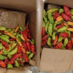 19 kilograms of cocaine, were found, hidden under these hot peppers, in a cargo plane, coming from Trinidad and Tobago. Photo courtesy of Canadian Border Services Agency.