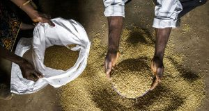 Every Year 700 Million People Fall Ill From Contaminated Food