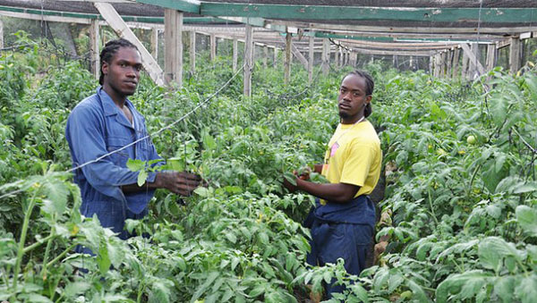 US And EU Food Standards Major Hurdle For Caribbean Exporters