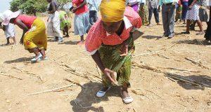 Investing In Zimbabwe's Smallholder Farmers
