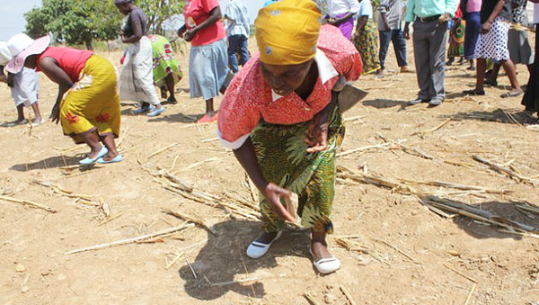Investing In Zimbabwe's Smallholder Farmers