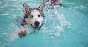 Water Safety Tips For Dogs