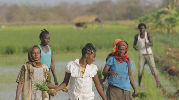 Women working on a rice farm in Ethiopia. Photo credit: WG Film.