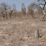 Protecting Africa's Drylands Key To The Continent's Future