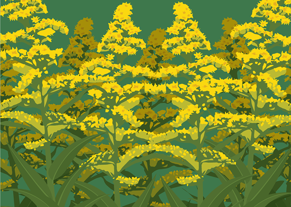goldenrod-of-fireworks