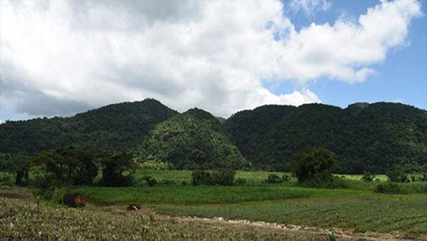 Jamaica's Forestry Department Contributes To Success Of Island's Tourism