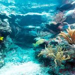 caribbean-coral-reef (1)