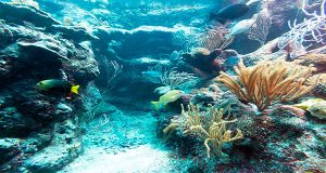 New Canadian Research Finds Reefs Help Protect Vulnerable Caribbean Fish From Climate Change Impact