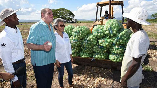 Jamaica Targeting Reduced Onion Imports