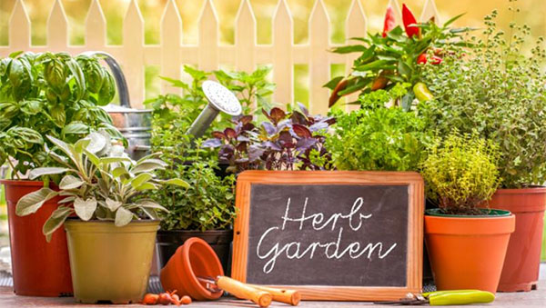 Fresh Herbs: The Key To Glorious Gourmet Salads