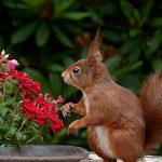 Pest-resistant Garden