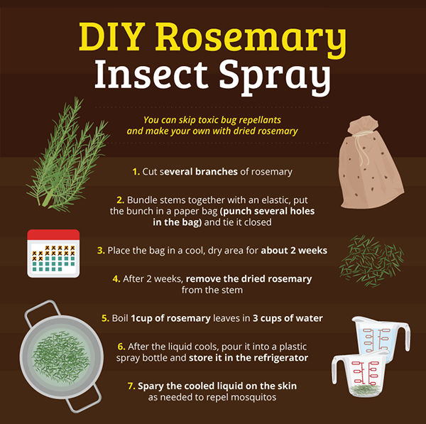 diy-insect-spray