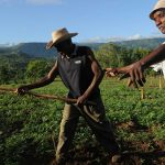 UN Agricultural Body Provides Funds To Hurricane-Affected Farmers In Haiti