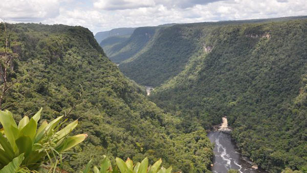 Mixed Signals As Guyana Develops Its Green Economy Strategy