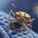 Stink bug sightings are on the rise. In winter, they tend to move indoors to wait out the cold weather. Photo credit: John Slaney/Flickr), CC BY-NC-SA.