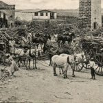Barbados was ground zero for racism and slavery, but due to the resilience of the islanders, it is a model country of democracy. Here a sugar cane harvest postcard, circa 1927. Photo credit: W. L. Johnson & Co. Ltd., Barbados. No. 15, CC BY-SA.