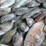 Caribbean Looks To Protect Its Seafood From Mercury