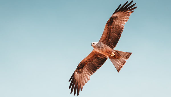 Why Perch Like A Chicken When You Are Capable Of Soaring Like An Eagle?