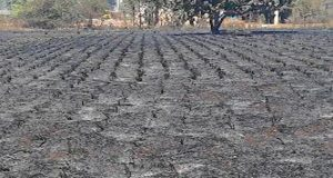 Caribbean Agricultural Research Development Institute Urges Regional Farmers To Implement Measures To Adapt To Drought
