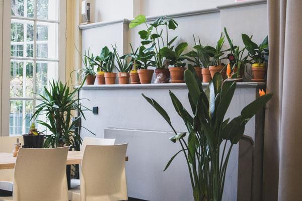 Indoor gardening -- Feature image 1