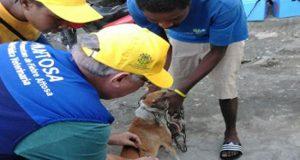 Pan American Health Organisation Launches Rabies Elimination Program In Haiti