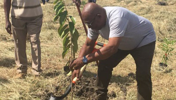 Barbados Government Launches Project To Plant More Than A Million Trees