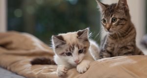 Preparing Your Home For A New Pet