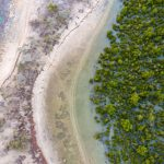Mangroves, like these in Madagascar, provide a range of benefits, including protection from storms and the prevention of coastal erosion. Photo credit: Louise Jasper/Blue Ventures; author provided.