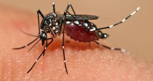 Trinidadians Urged To Ensure They Are Vaccinated Against Yellow Fever