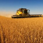 Soil degradation: over one-third of the Corn Belt, the epicenter of American corn and soybean production, has lost its carbon-rich top soil.  Photo credit: Bigstock.