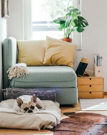 Let your pet explore your new home at its own pace. Photo credit: Brina Blum/Unsplash.